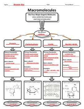 Graphic Organizer For Organic Or Macromolecules With Images