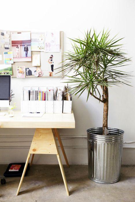 Office Palm Plant