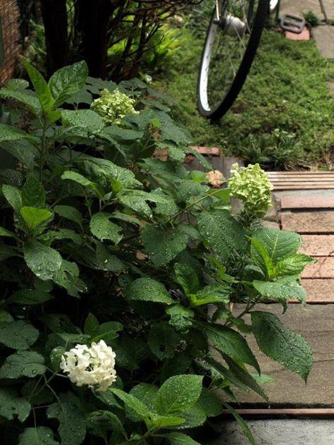 紫陽花のドライフラワーを真っ白くする方法 窪田千紘フォトスタイリングwebマガジン Klastyling 暮らす スタイリング Powered By ライブドアブログ 2020 ドライフラワー 植物栽培 ガーデニング