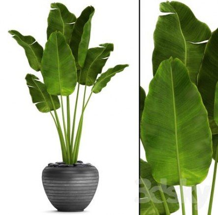 Plants Png Potted 38 Ideas Potted Plants Outdoor Banana Plant Indoor Potted Plants Patio