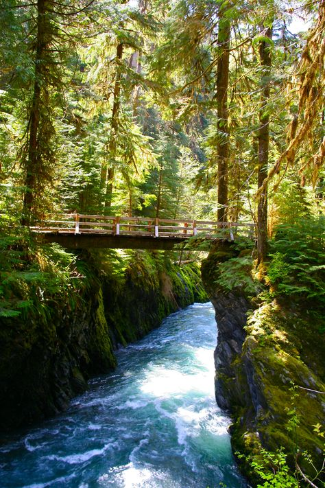 """""""Olympic National Forest"""" - Pony Bridge along the Quinault River in the Olympic National Park, Washington from Georgia Badertscher. Oh The Places You'll Go, Places To Travel, Places To Visit, Evergreen State, Columbia River Gorge, Olympic Peninsula, All Nature, Parcs, Route 66"""