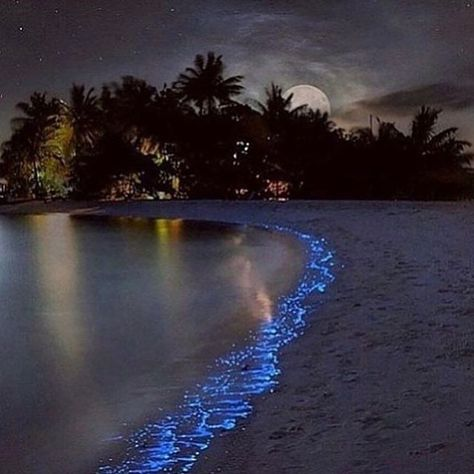 Tag who you'd go with 👇 Maldives, photo by ©Olga Scheglova #awesome_naturepix