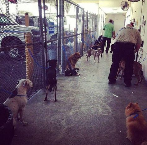 Please Adopt Or Rescue Dogs Being Surrendered Just Prior To The