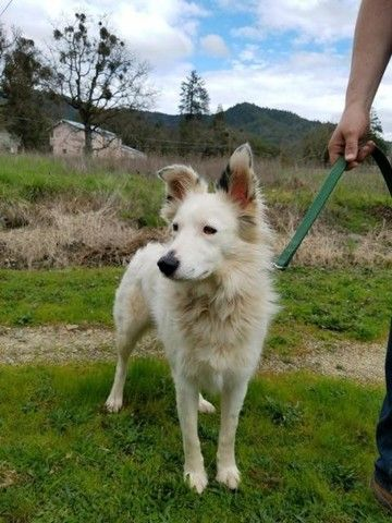 Check Out Toby S Profile On Allpaws Com And Help Her Get Adopted
