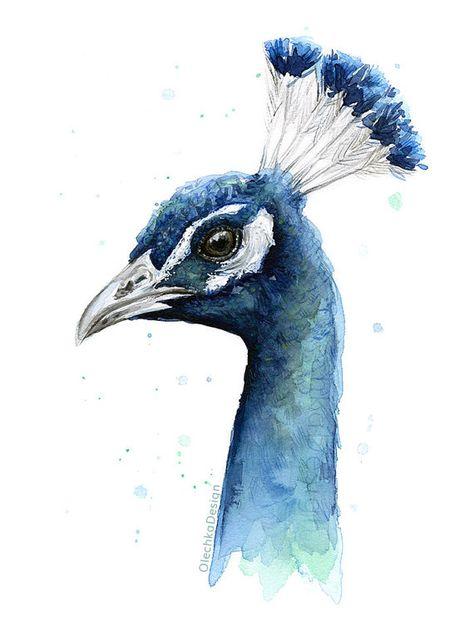 Peacock Watercolor Print Bird Painting Animal by OlechkaDesign