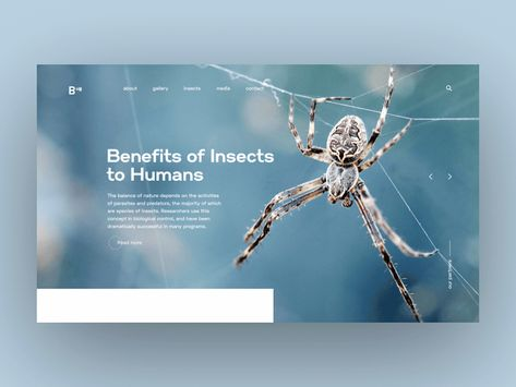 Insect - Daily animated UI