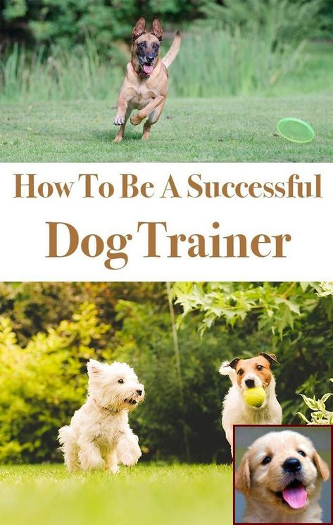 House Training A Puppy With Pads And Clicker Training Dog On Leash