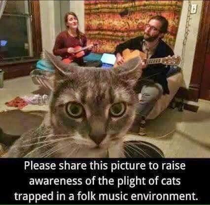 The Plight Of Cats Trapped In A Folk Music Environment Funny Cat Memes Cats Cat Memes