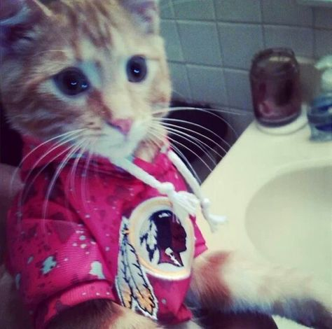 Yes Httr Cat Clothes Cats Animals