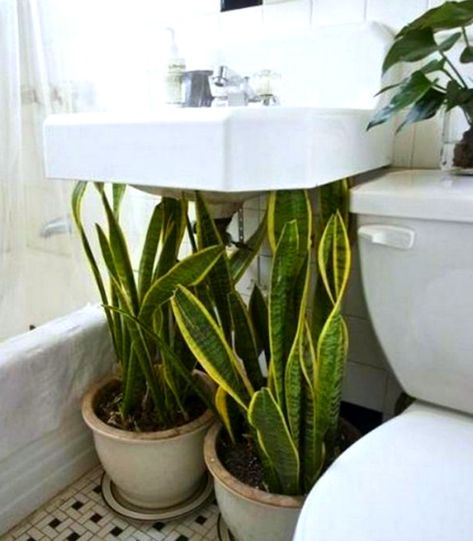 plants for decorating your bathroom