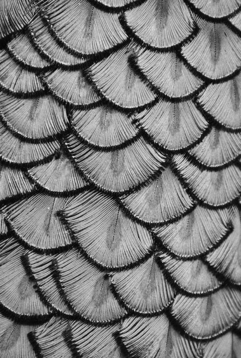 FEATHERY FORMATION | MICHAEL FITZSIMMONS — Patternity