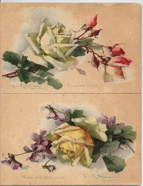 IN FLOWERTIME   Roses