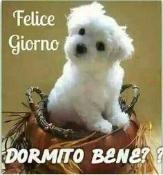 Felice giorno# Buongiorno # cane# cuccioli # dediche