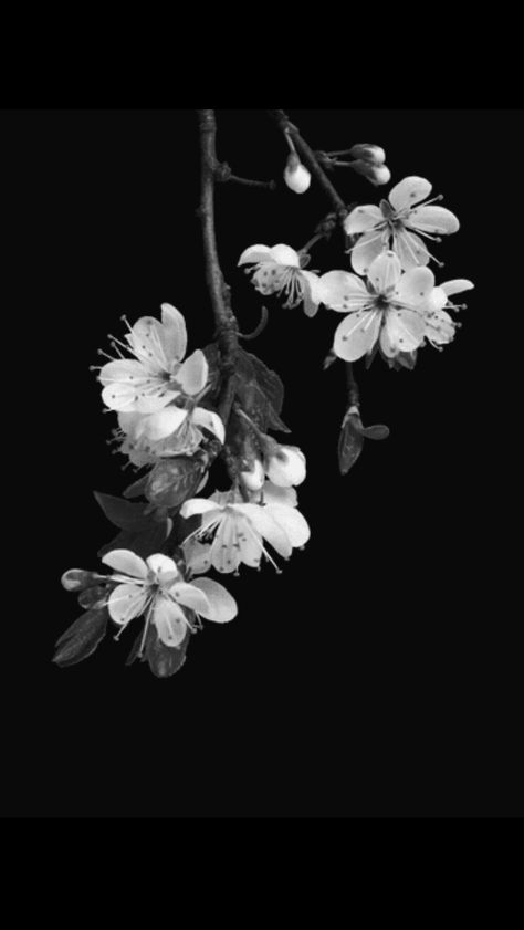 63 Trendy Flowers Black And White Photography Cherry Blossoms Black Flowers Flower Backgrounds Black And White Flowers Black and white flower wallpaper iphone