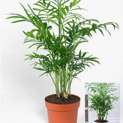 Pin Auf Zimmerpflanzen