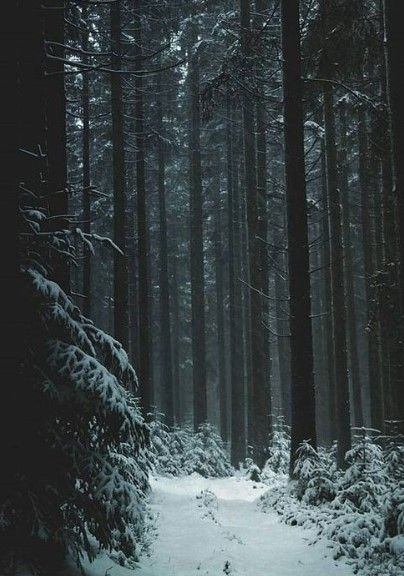 Snow Nature Winter Forest Photography Forest Photography Winter Forest Winter Landscape
