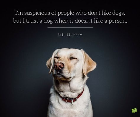 20 Dog Quotes For People Who Love Dogs Dog Quotes Dog Love
