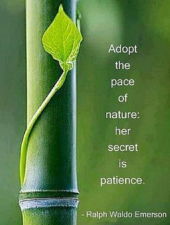 Adopt the pace of nature, her secret is patience - Ralph Waldo Emerson. So true. Think of the times when you are sitting outside totally in tune with nature. Ralph Waldo Emerson, Citation Nature, Nature Secret, Be Patience, Patience Quotes, Tea Blog, Encouragement, Burn Out, Garden Quotes