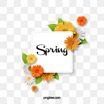 Spring Flower Spring Green Plant Flower Spring Decoration In The Warm Spring Png Transparent Clipart Image And Psd File For Free Download Spring Flowers Background Spring Background Images Flower Clipart