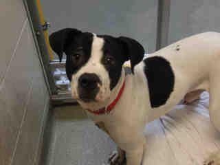 St Louis Pet Adoption Pets Humane Society Adoption