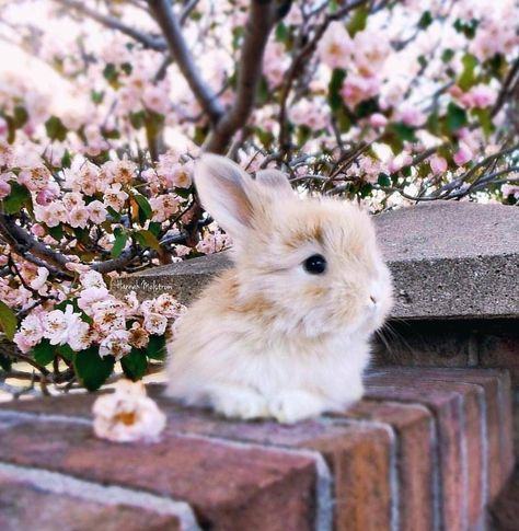 Cute rabbit photography.