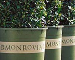 Monrovia Nursery Woodlake Ca Thenurseries