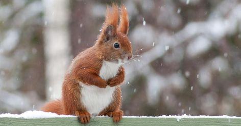 Photo of Eichhörnchen im Winter füttern
