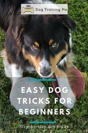 Easy Dog Tricks For Beginners Dog Hacks Dog Training Dog
