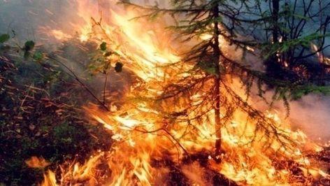 Петиция · Президент РФ : Примите меры по тушению пожара в Сибири, пока ещё не поздно. · Change.org