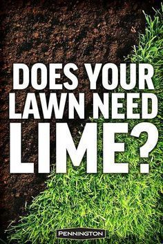 Why When And How To Apply Lime To Your Lawn Reseeding Lawn Lawn Fertilizer Lawn