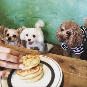 看板犬がいる東京のカフェ特集 いらっしゃいワンっておもてなし 4meee 犬 いぬ 大型犬