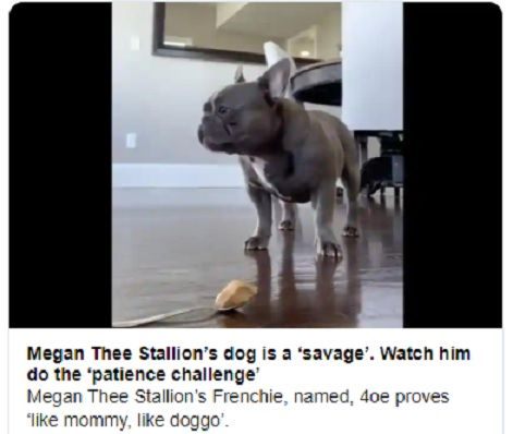 megan thee stallion s dog is a savage watch him do the patience challenge in 2020 stallion dogs french bulldog patience challenge