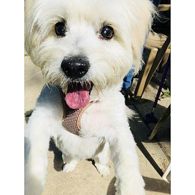 Kalamazoo Mi Terrier Unknown Type Medium Meet Mimi A Dog For Adoption Dog Adoption Amazing Animal Pictures Pet Adoption