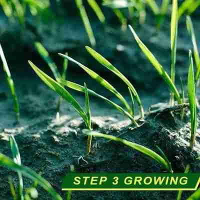 Grass anything will grow 🌱 seed that on Best Grass