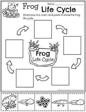 Pond Theme Preschool Planning Playtime Life Cycles Preschool Life Cycles Frog Life Cycle Worksheet Fun worksheets for pre k