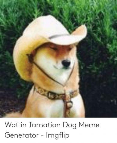 Dog With Hat Maker : maker, Maker, Tarnation, Photo, Template,, Hats,, Memes