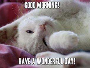Cute Cat Good Morning Memes For Her Funny Good Morning Memes Good Morning Funny Pictures Cute Good Morning