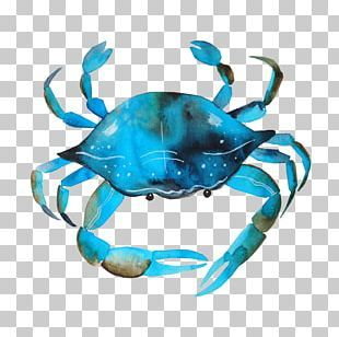 Watercolor Animal Png Images Watercolor Animal Clipart Free Download Blue Crab Watercolor Animal Clipart Free Crab Watercolor