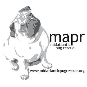 Pug Rescue Directory Pug Breeders Pugs Pug Puppies