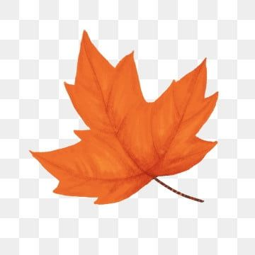 Autumn Red Maple Leaf Floating Falling Material Hand Painted Red Maple Maple Leaf Png Transparent Clipart Image And Psd File For Free Download In 2020 Leaf Drawing Leaf Clipart Paint Background