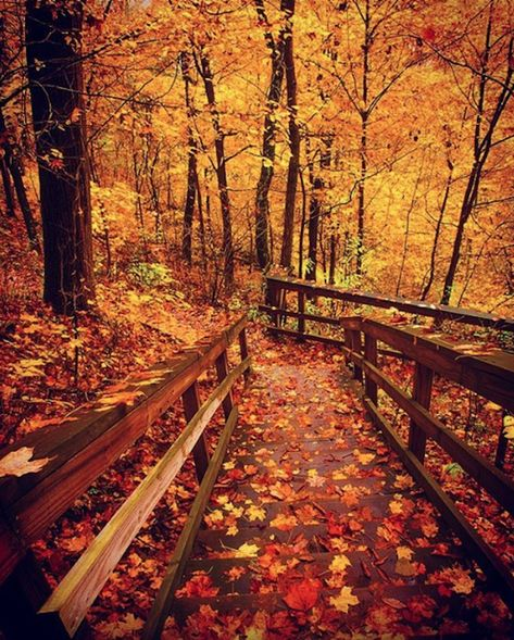 The Awesome Hike Near Cincinnati That Will Take You To The Most Spectacular Fall Foliage In The Area