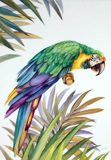 правило, тропическая птица рисунок туда попасть
