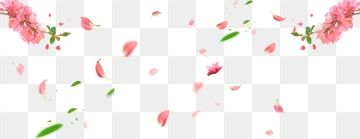 Spring Spring Spring Peach Blossom Cherry Blossoms Leaves Petals Falling Png Transparent Clipart Image And Psd File For Free Download Sakura Flower Peach Blossoms Japanese Flowers