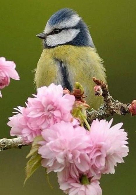 Pin By Judy White On Bird Birds Beautiful Birds Pretty Birds