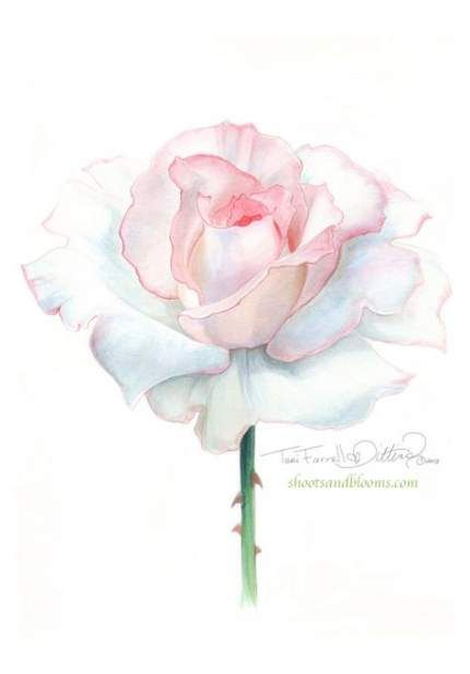 Drawing Rose Tattoo Watercolor Painting 20 Super Ideas Painting