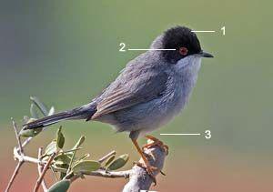 Identifier Les Oiseaux Des Jardins Et Des Villes D Europe En Hiver Ornithomedia Com Oiseaux Des Jardins Oiseaux Oiseaux Du Quebec