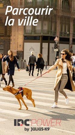 Mon Chien Tire En Laisse : chien, laisse, Chien, Laisse, Causes, Solutions, Toutoupourlechien.com, Harnais, Chien,, Hongrois