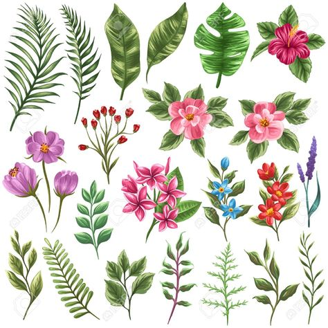 Set of traditional and tropical flowers and leaves Stock Vector - 36911078