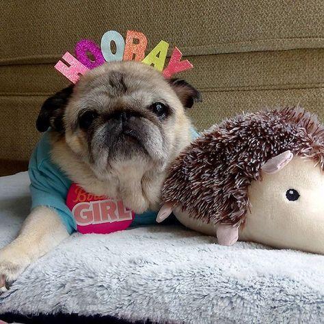 buzzfeedanimals Hooray! It's my Birthday! 15...