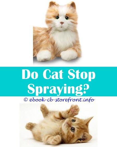 Pin En Cat Spray Remover